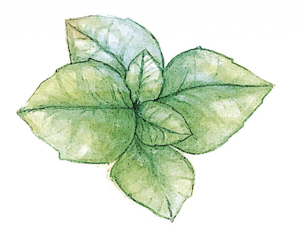 Ilustración: Helen León
